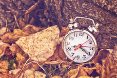 Vintage alarm clock in dry autumn leaves Royalty Free Stock Photo