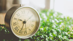 Vintage Alarm Clock with Roman Numeral on The Grass Stock Images