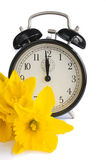 Vintage clock, yellow daffodils, spring, dst. Vintage alarm clock with yellow daffodil flowers on white. Concept for spring coming, change of seasons, and royalty free stock photos