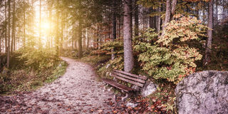 Vintage Alley in Old Autumn Park Royalty Free Stock Photography