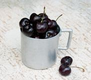Vintage aluminium mug full of fresh cherries Royalty Free Stock Images