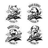 Vintage American furious bull, wolf, panther, rhino bikers club tee print vector design. Street wear t-shirt emblem. Premium quality wild animal superior logo Stock Images