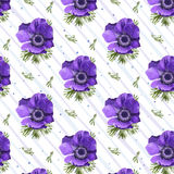 Vintage Anemone Coronaria purple lilac poppy beautiful flowers l. Eaves background, feminine blooming square wallpaper botanical floral design watercolor style Royalty Free Stock Photos