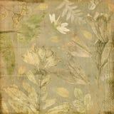 Vintage antique botanic floral collage paper background Stock Photo