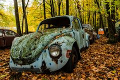 Vintage Antique Car - Junkyard in Autumn - Abandoned Volkswagen Type 1 / Beetle - Pennsylvania royalty free stock image
