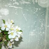 Vintage apple blossoms. Stock Photography