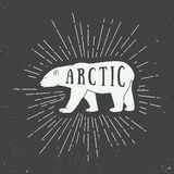 Vintage arctic white bear with slogan. Stock Images