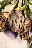 Vintage Artichoke Stock Photos