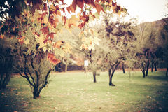 Vintage Autumn Royalty Free Stock Photos