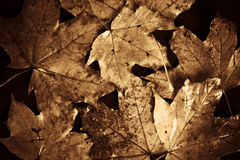 Vintage autumn Royalty Free Stock Photography