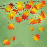 Vintage autumn background with branch of tree Royalty Free Stock Photos