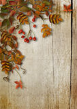 Vintage autumn background with leaves and rowan on wooden boards Royalty Free Stock Photography