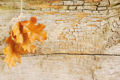 Vintage Autumn background Stock Images