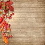 Vintage autumn background with rowan on wooden board Royalty Free Stock Photos