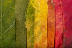 Autumn Leaves. Vintage autumn fallen colorful leaves Royalty Free Stock Photo