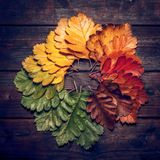 Autumn Leaves over old wooden background. Vintage autumn fallen leaves on the old wooden table Stock Images