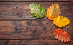 Autumn Leaves over old wooden background. Vintage autumn fallen leaves on the old wooden table Stock Photo