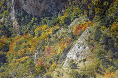 Vintage autumn forest Stock Photos