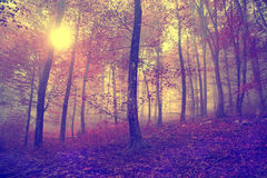 Vintage autumn forest scene Royalty Free Stock Photo
