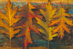 Vintage autumn leaves with patina background Stock Photos