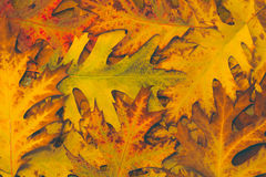 Vintage autumn leaves with patina background Stock Image