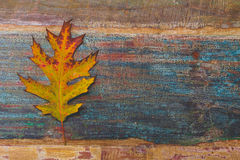 Vintage autumn leaves with patina background Royalty Free Stock Photo