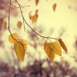 Vintage autumn leaves Stock Photos