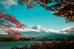 Mount Fuji in Autumn Color, Japan. Vintage autumn of Mount Fuji, Japan - Lake Kawaguchiko is one of the best places in Japan to enjoy Mount Fuji scenery of maple stock image