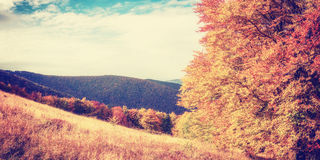 Vintage Autumn Panorama Stock Images