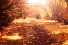 Vintage Autumn Path. An autumn path with leaves in a vintage look Royalty Free Stock Photography