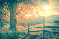 Vintage autumn tree at sunset with sunbeams, mountains landscape Royalty Free Stock Images