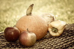 Vintage autumn vegetables Royalty Free Stock Image
