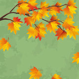Vintage autumn wallpaper, leaf fall background Royalty Free Stock Photos