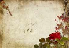 Vintage autumnal background with roses and ashberry Royalty Free Stock Photo
