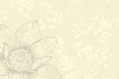 Vintage background. Vector illustration with flower for greeting card Stock Images