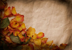 Vintage background. With colorful wilted rose petals Royalty Free Stock Image