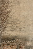 Vintage background. A photo of an old wall with the ivy stock photography