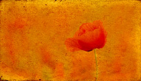 Vintage background. With poppy can be used for layers stock photo