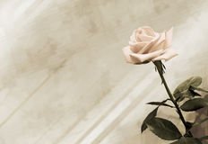 Vintage background. With pink rose royalty free stock photos