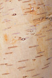 Vintage background. From bark of birch tree Royalty Free Stock Photo
