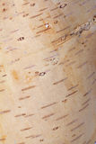 Vintage background. From bark of birch tree Royalty Free Stock Images