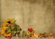 Vintage background with beautiful border autumn decorations Royalty Free Stock Image