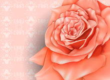 Vintage background with beautiful pastel rose Royalty Free Stock Image