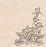 Vintage background. Beautiful rose in the corner of mint, old paper Royalty Free Stock Images