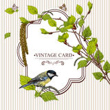 Vintage background with birch branches and tit Stock Photos
