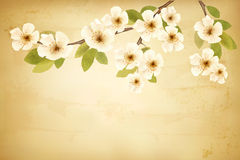 Vintage background with blossoming tree brunch and Stock Image
