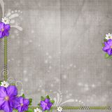 Vintage background with blue flower and daisy Stock Photos