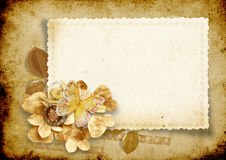 Vintage background with card and paper flowers. Vintage elegance card card for photo or text  with seashells and roses Royalty Free Stock Photos