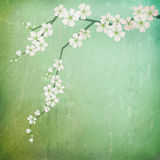 Vintage background with cherry blossoms branch Royalty Free Stock Photo