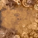 Vintage background with clocks and leaves. Vintage sepia background with clocks and leaves Vector Illustration